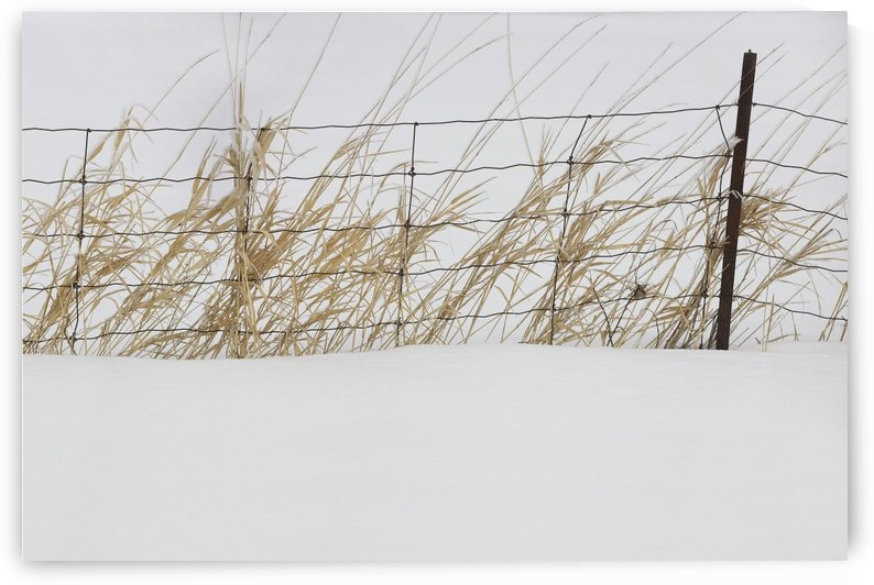 Thunder Bay, Ontario, Canada; Tall Grass Growing Along A Fence In The Snow by PacificStock