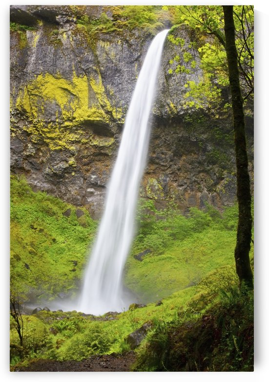 Elowah Falls In Columbia River Gorge National Scenic Area; Oregon, Usa by PacificStock