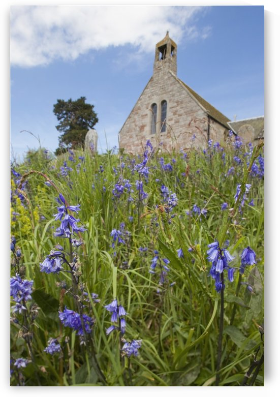 Wildflowers In Front Of A Stone Church; Bamburgh, Northumberland, England by PacificStock