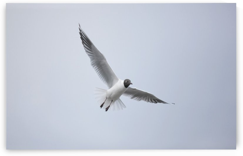 A Bird In Flight; Amble, Northumberland, England by PacificStock