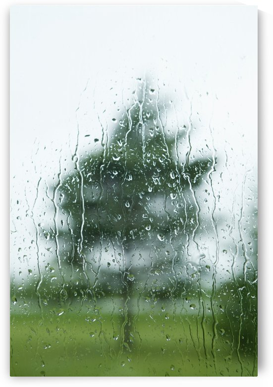 Raindrops On The Window With A Tree Outside; Thunder Bay, Ontario, Canada by PacificStock