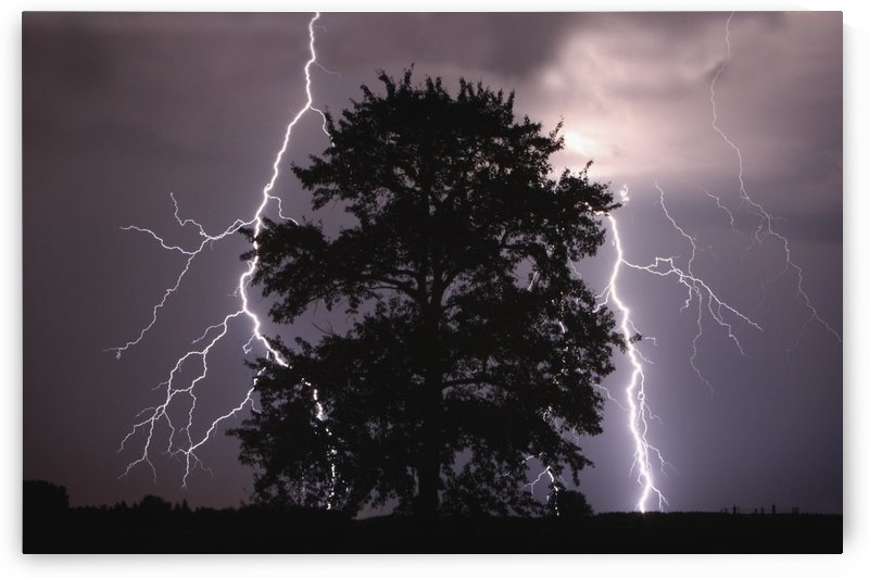 Lightning Strikes In The Sky Behind A Tree; Alberta, Canada by PacificStock