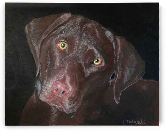 Inquisitive Chocolate Lab by Tidwell