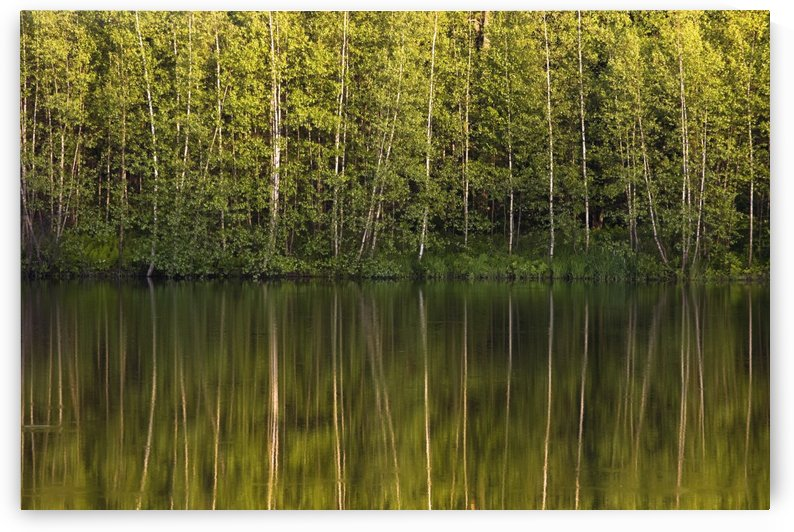 Trees Reflected In The Water; Foster, Quebec, Canada by PacificStock