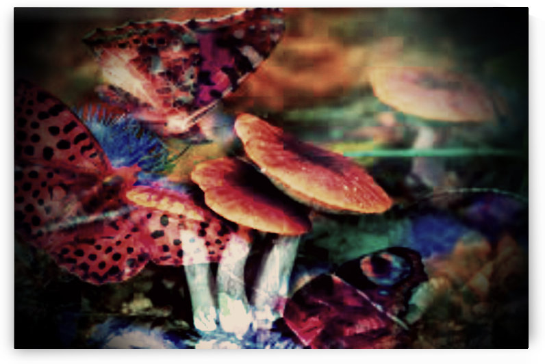 mushroom by jessica bell