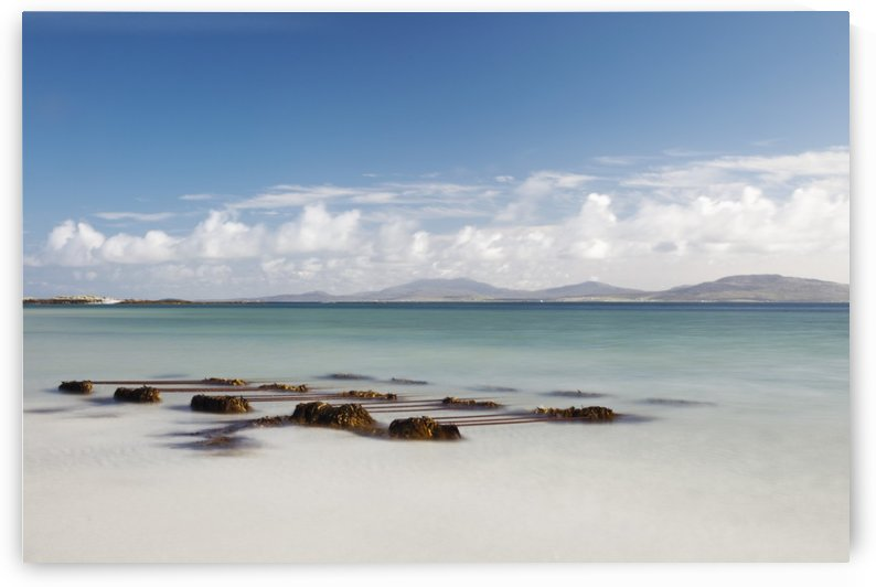 Seaweed On The Shore On Eilogarry Beach; Isle Of Barra, Scotland by PacificStock