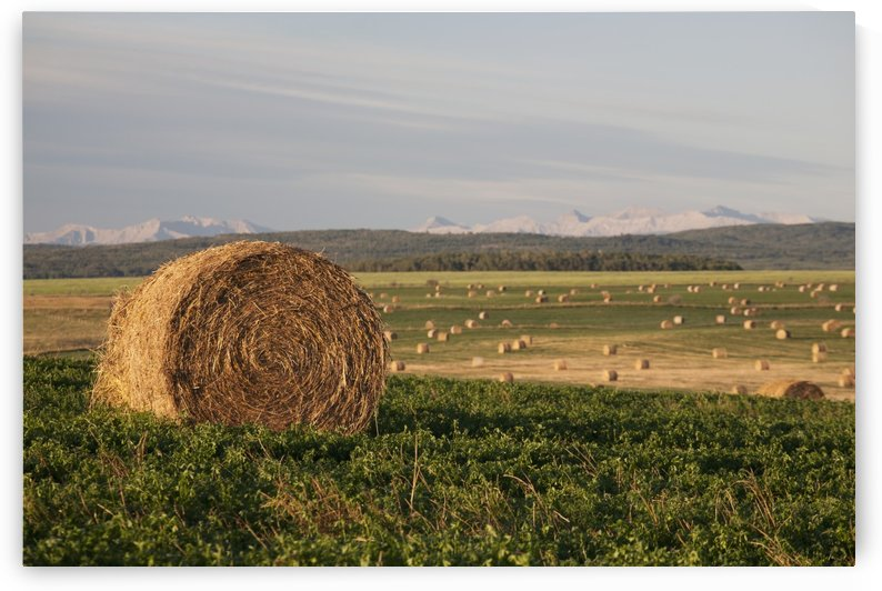 Hay Bales In A Field With Mountains In The Background At Sunrise; Alberta, Canada by PacificStock