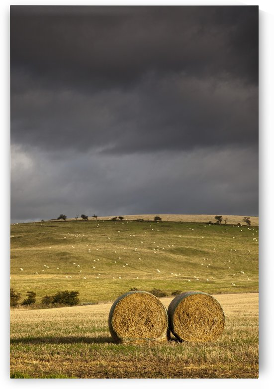 Hay Bales In A Field Under A Dark Cloudy Sky; Northumberland, England by PacificStock