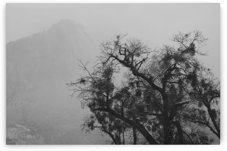 Tree And A Mountain In The Fog In Yosemite Park; California, Usa by PacificStock