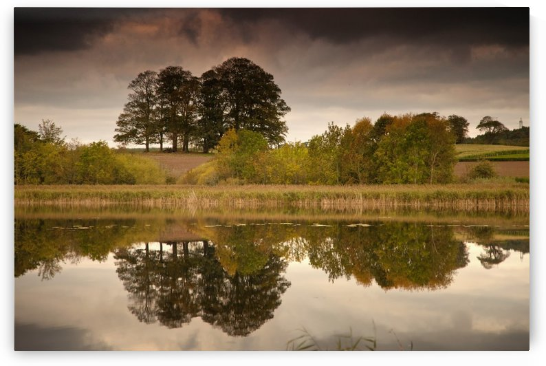 Trees Reflected In The Water; Coldstream, Scottish Borders, Scotland by PacificStock
