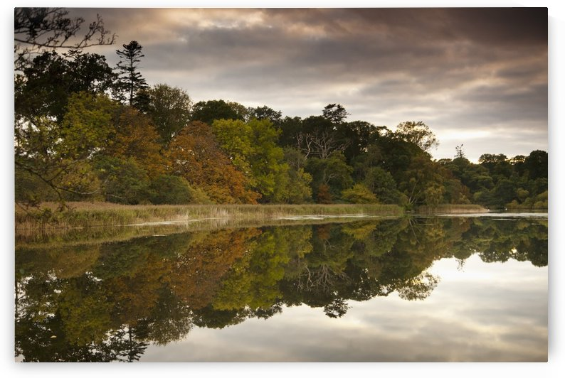 Trees Reflected In Tranquil Water; Scottish Borders, Scotland by PacificStock