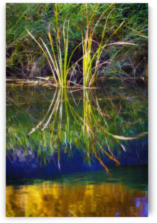 Reeds Reflecting On The Water; St. Albert, Alberta, Canada by PacificStock