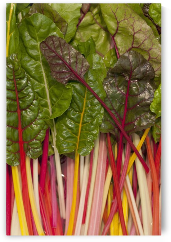 Colorful Rainbow Swiss Chard; Calgary, Alberta, Canada by PacificStock