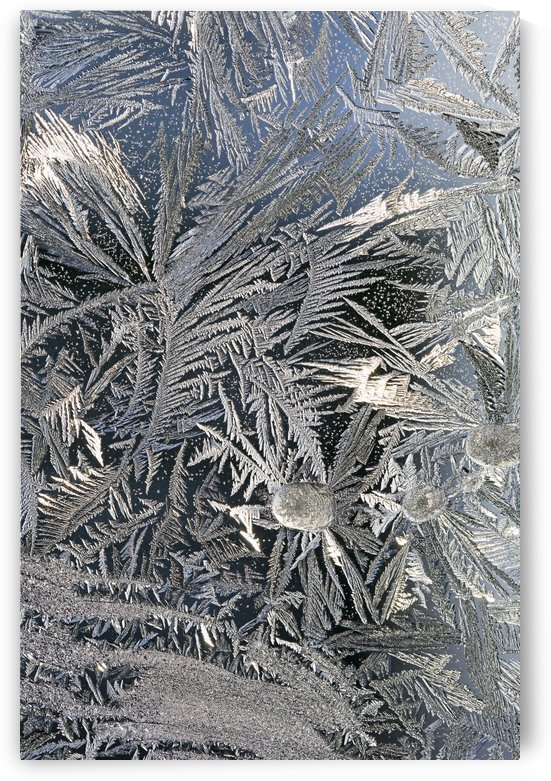 Frost Crystals On A Window; Calgary, Alberta, Canada by PacificStock