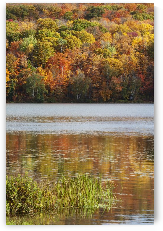Reflection Of Autumn Colors In A Lake; Ontario, Canada by PacificStock