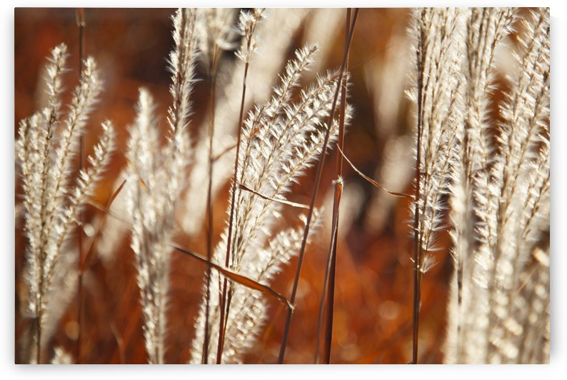 Tall Grass; Portland, Oregon, United States Of America by PacificStock