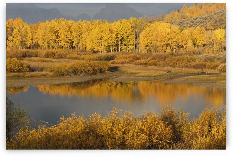 Autumn Foliage Surrounds A Pool In The Snake River; Wyoming, United States Of America by PacificStock