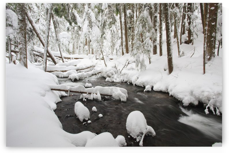 Winter Snow Along Still Creek In Mt. Hood National Forest; Oregon, United States Of America by PacificStock