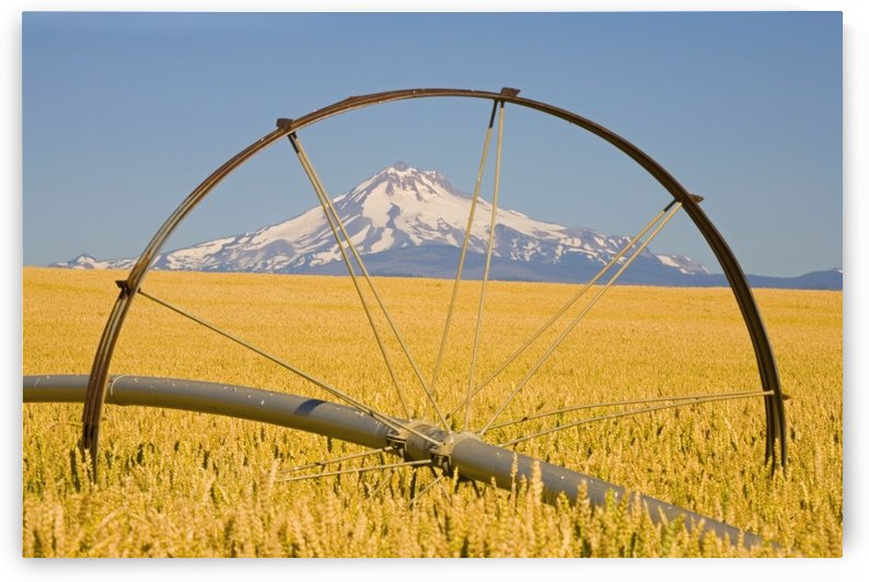 Irrigation Pipe In Wheat Field With Mount Hood In Background; Oregon, Usa by PacificStock