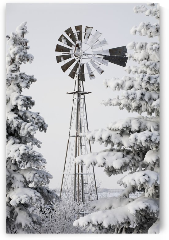 Old Windmill And Trees Covered With Snow And Frost; Calgary, Alberta, Canada by PacificStock