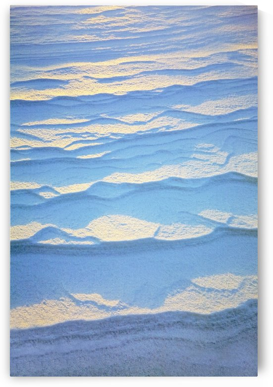 Detail Of Ripple Pattern In The Snow At Sunrise; Calgary, Alberta, Canada by PacificStock