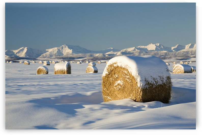 Snow-Covered Hay Bales; Okotoks, Alberta, Canada by PacificStock