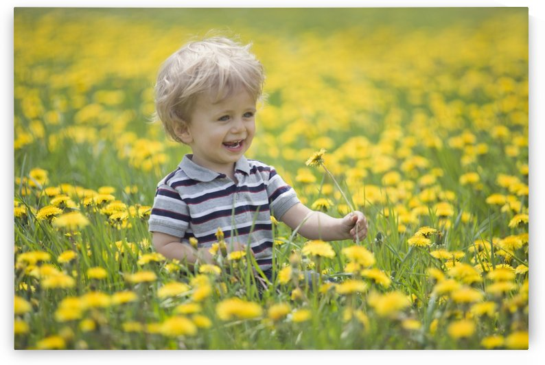 18-Month-Old Boy In Dandelion Field; Thunder Bay, Ontario, Canada by PacificStock