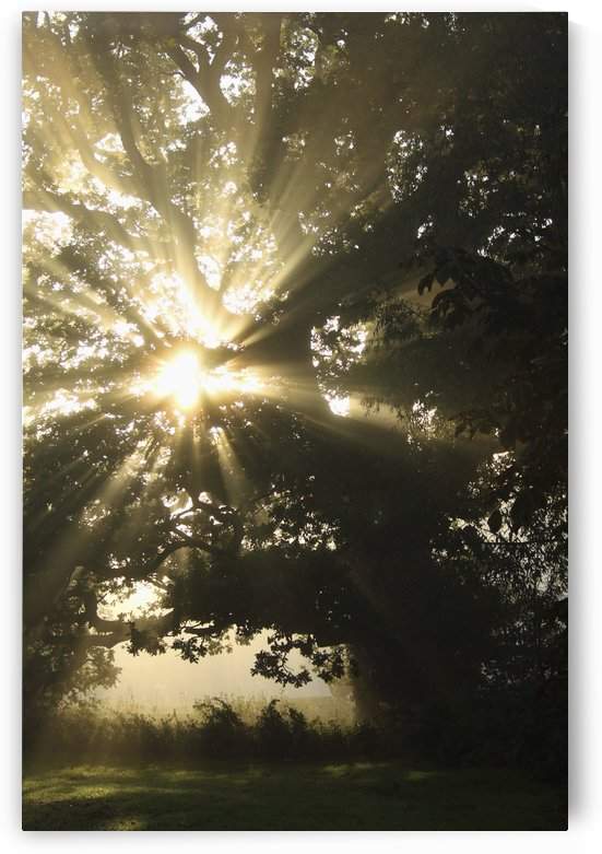 Sunlight Through Tree; Cahir, County Tipperary, Ireland by PacificStock