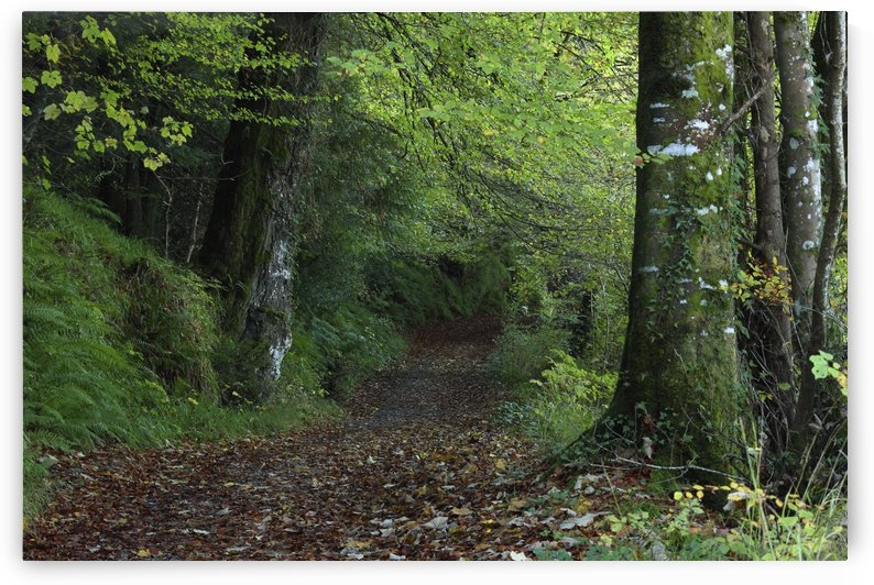 Path Through The Woods; Inistioge, County Kilkenny, Ireland by PacificStock