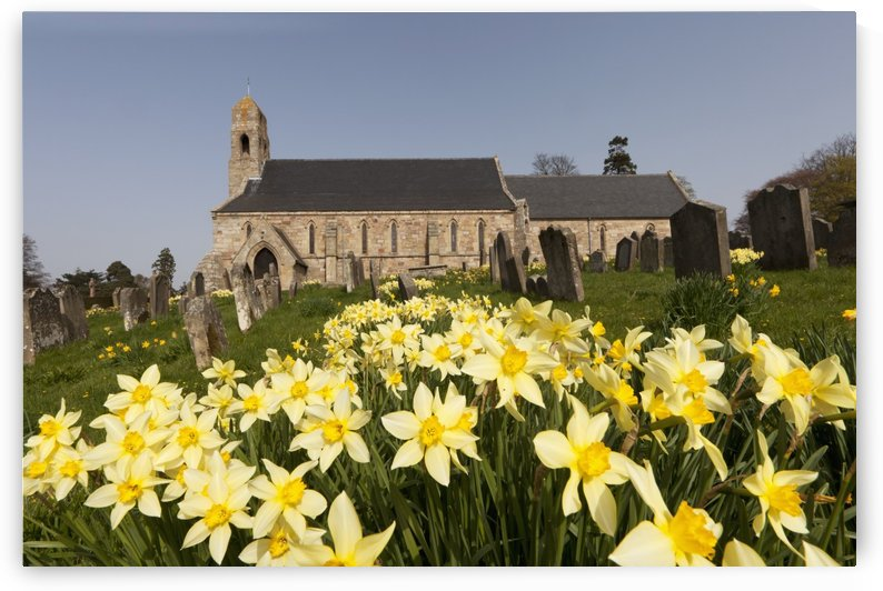 Yellow Daffodils In A Cemetery Beside A Church; Ford Northumberland England by PacificStock