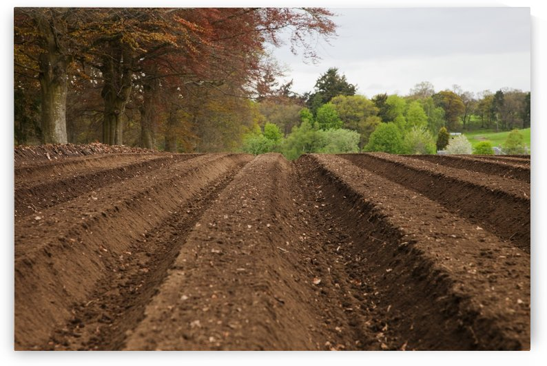 Farm Land Tilled And Ready For Planting; Perth, Scotland by PacificStock