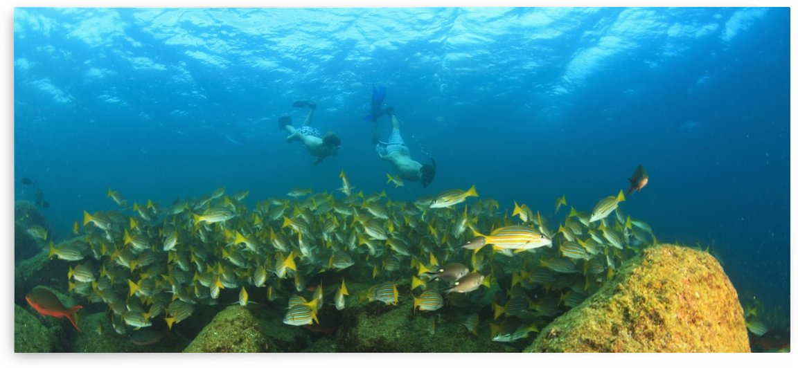 A School Of Fish Underwater And Two Tourists Scuba Diving At Los Islotes National Marine Park Espiritu Santo Island; La Paz Baja California Mexico by PacificStock