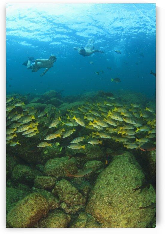 A Tourist Swimming With A School Of Fish Underwater At Los Islotes National Marine Park Espiritu Santo Island; La Paz Baja California Mexico by PacificStock
