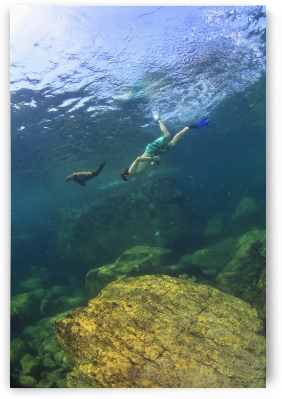 A Tourist Swims Underwater With A Sea Lion At Los Islotes National Marine Park Espiritu Santo Island; La Paz Baja California Mexico by PacificStock