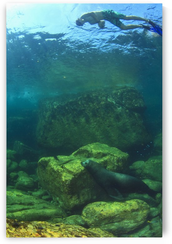 A Tourist Swims Underwater With A Sea Lion At Los Islotes National Marine Park Espiritu Santo Island; La Paz Baja California Mexico by PacificStock