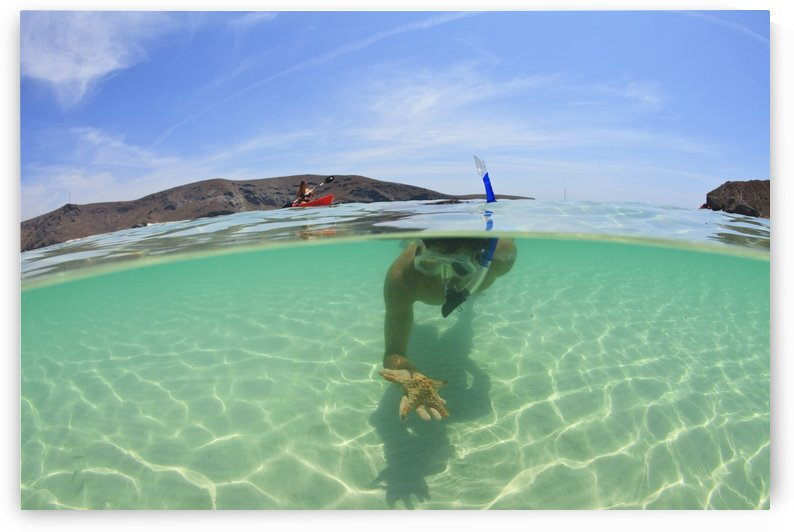 A Young Man Snorkeling Underwater Holding A Starfish In His Hand; La Paz, Baja, California, Sur Mexico by PacificStock