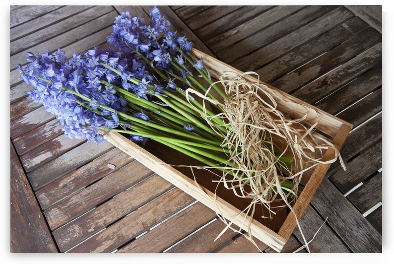 A Bundle Of Bluebells Tied With Twine; Northumberland, England by PacificStock