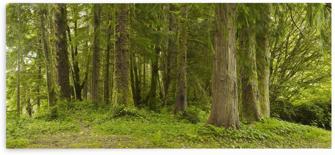 A Lush Forest; Tofino, British Columbia, Canada by PacificStock