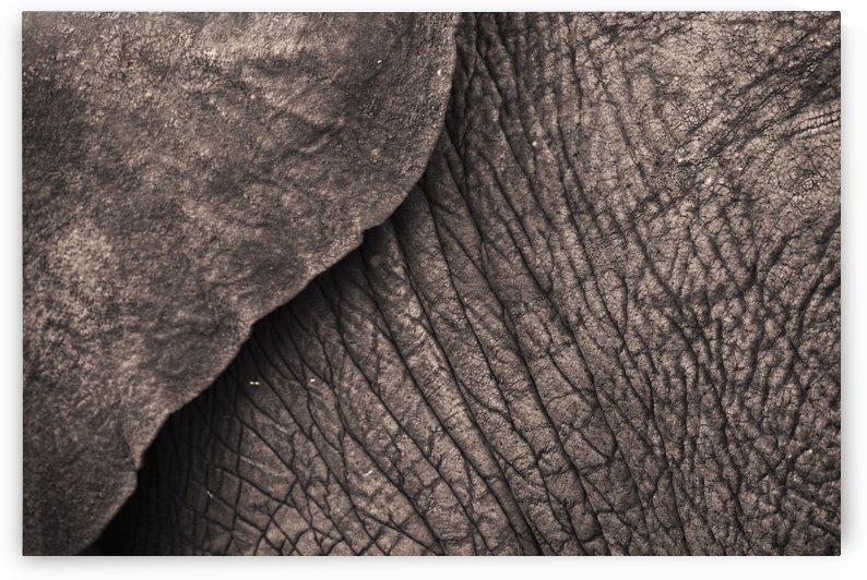 Close-Up Of An Elephant's Skin; Samburu, Kenya by PacificStock