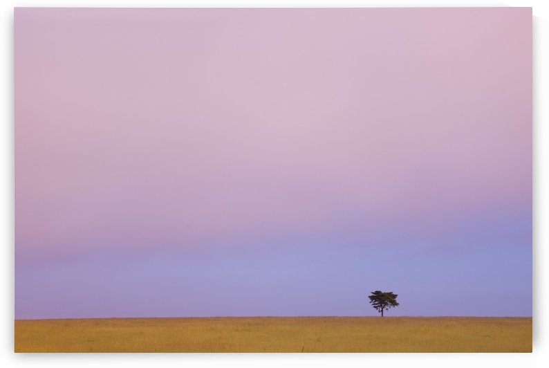 A Lone Tree Against The Horizon At Sunset; Kenya by PacificStock