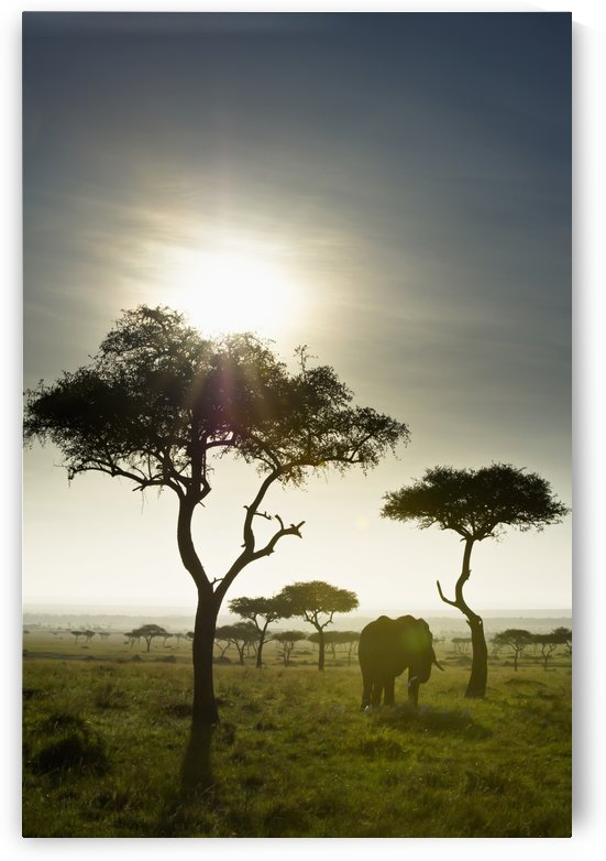 An Elephant Walks Among The Trees; Kenya by PacificStock