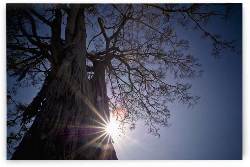 The Sunlight Shines Behind A Tree Trunk; Kenya by PacificStock