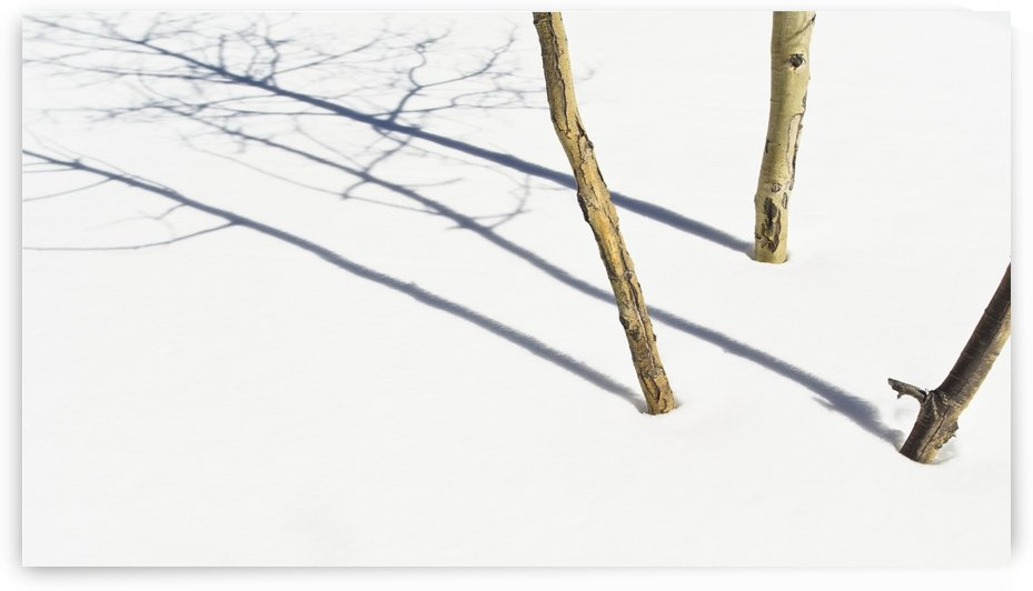 Shadow Of Small Trees On The Snow; New Mexico, United States of America by PacificStock