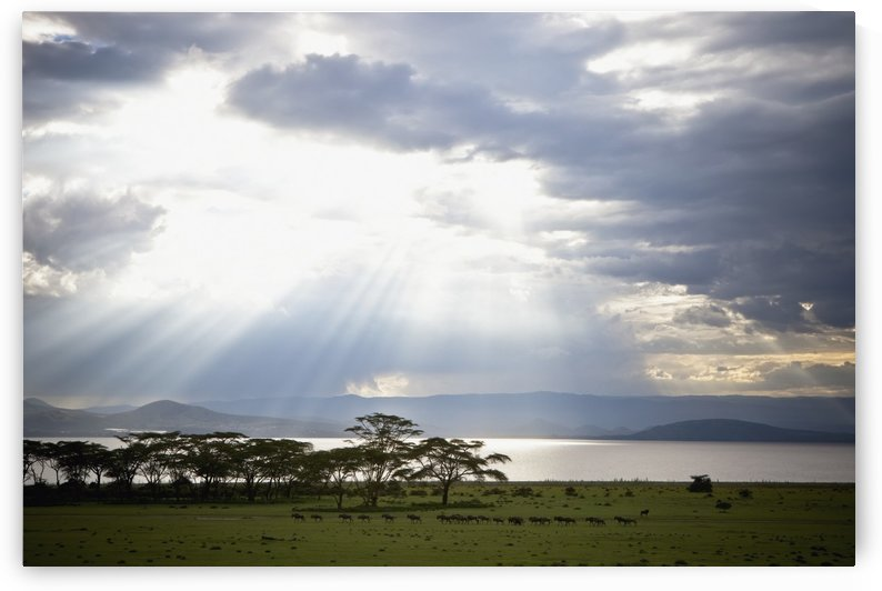 Sunlight Shines Down Through The Clouds Onto A Lake; Kenya by PacificStock
