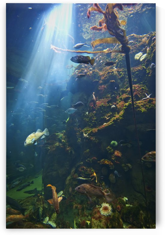 View Of Fish In An Aquarium In The San Francisco Academy Of Science; California United States Of America by PacificStock