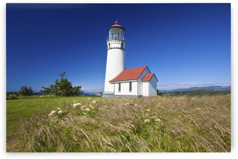 Wildflowers And Cape Blanco Lighthouse; Cape Blanco Oregon, United States of America by PacificStock