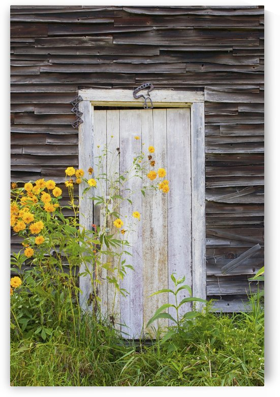 Door To An Old Shed With Wildflowers Growing Outside; Iron Hill, Quebec, Canada by PacificStock
