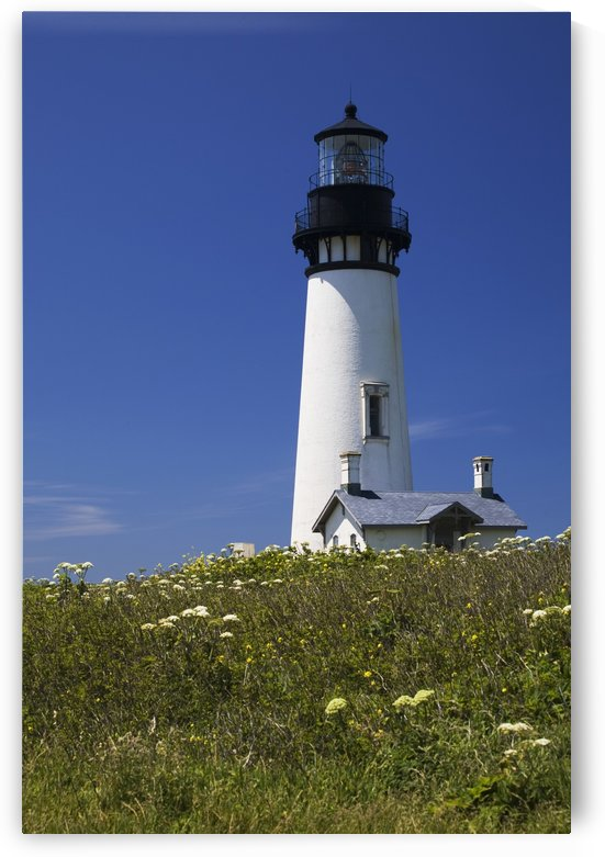 White Lighthouse With A Blue Sky And Wildflowers; Newport, Oregon, United States of America by PacificStock