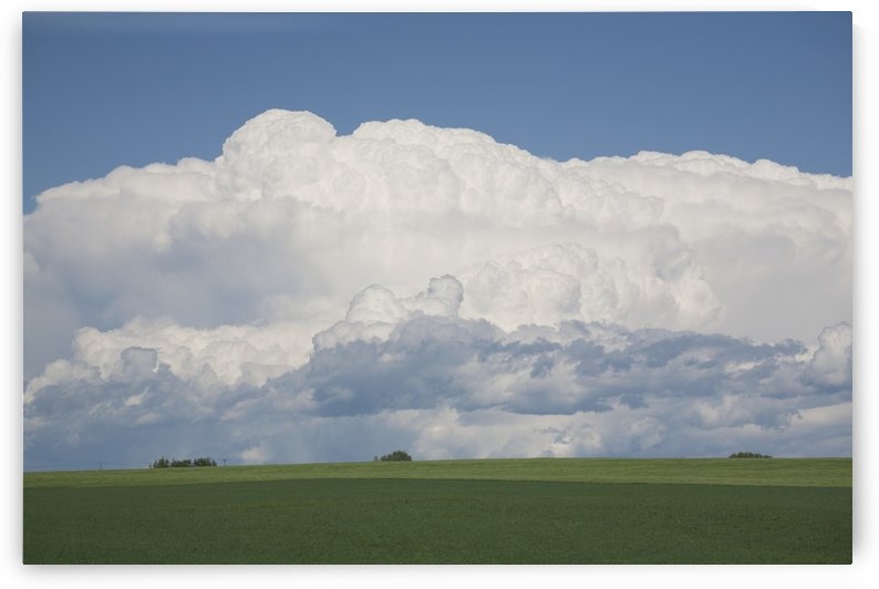 Dramatic Thunderstorm Clouds In Green Wheat Fields And Blue Sky; Alberta, Canada by PacificStock