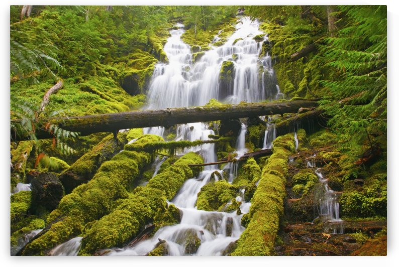 Proxy Falls In Willamette National Forest; Oregon, United States of America by PacificStock